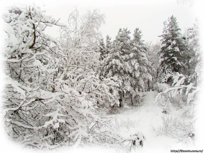 Зимние пейзажи Подмосковья. Деревья в снегу.