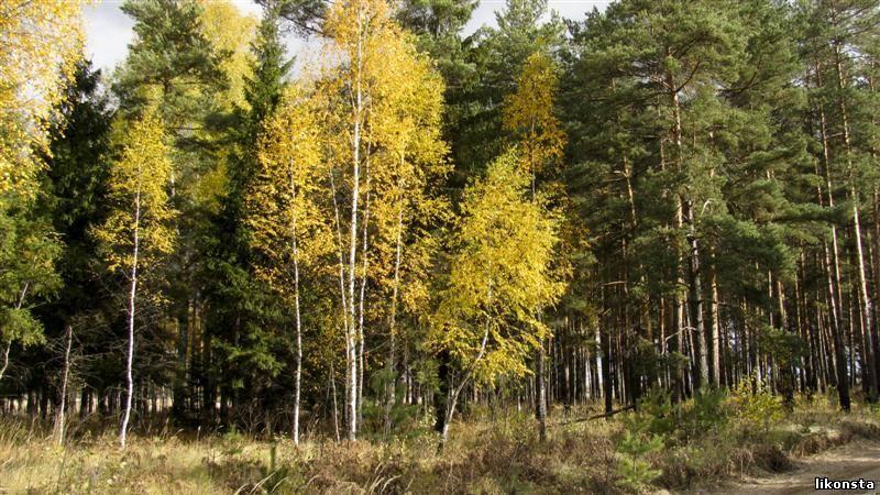 Осень золотая<alt>