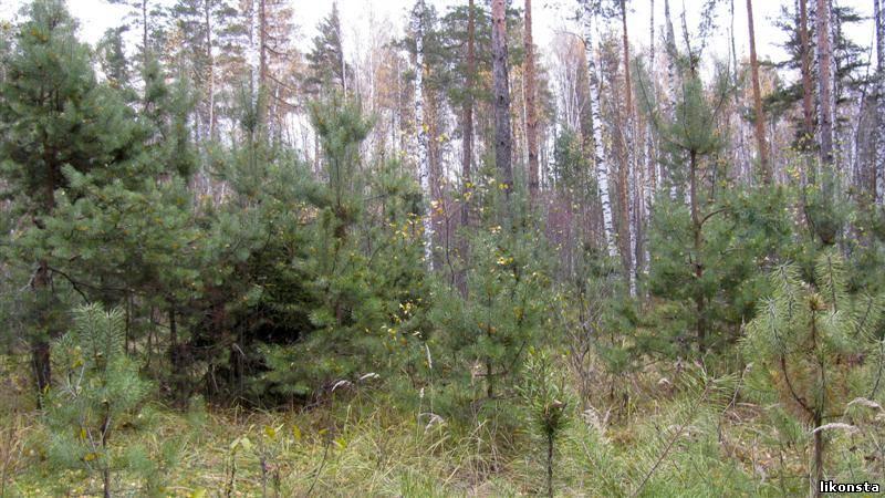 Осенний лес<alt>