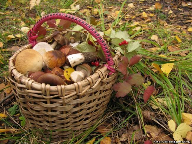 <alt>Осень. Корзина с грибами</alt>